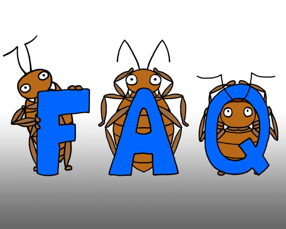 bed bug Frequently Asked Questions by Bed Bugs Limited of London