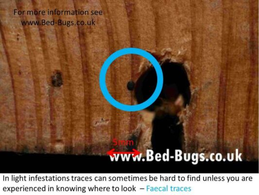 Sig‍‍‍ns of Bed Bugs