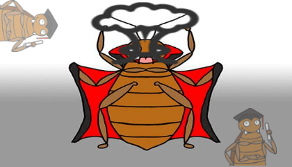 bed bug head bugs information by Bed Bugs Limited of London